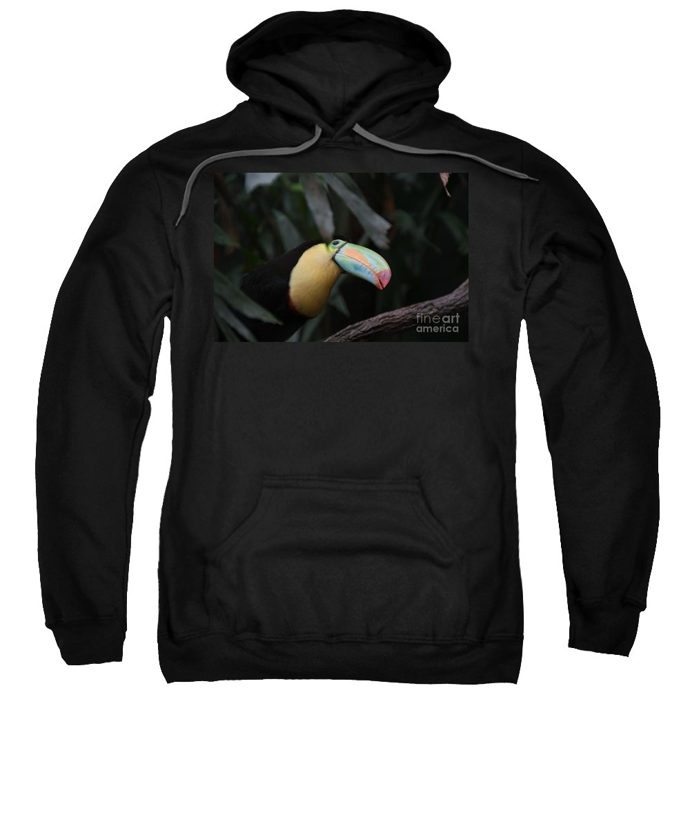 Animals Sweatshirt featuring the digital art Tucan by Carol Ailles