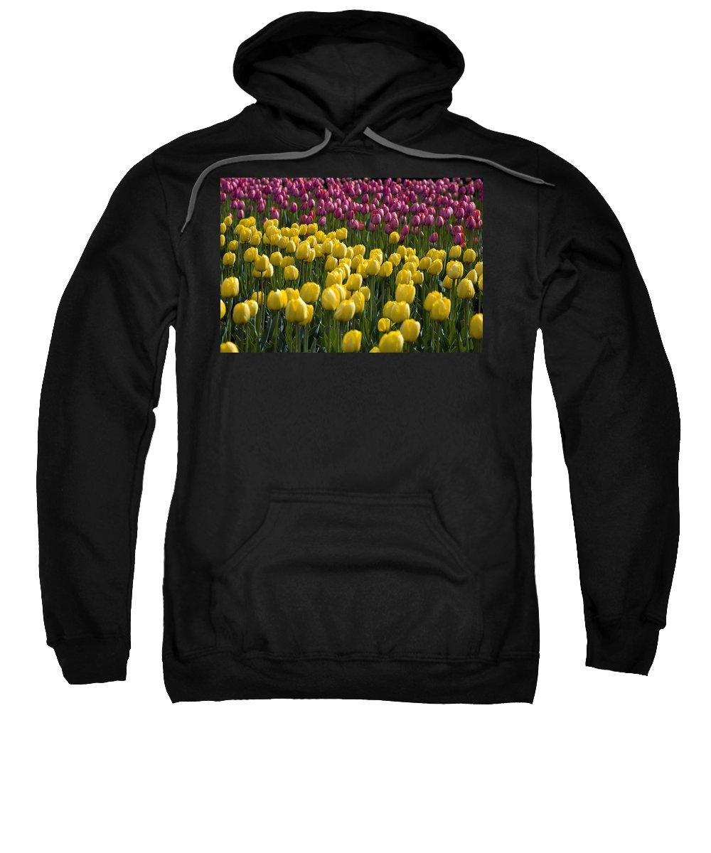 Bunch Sweatshirt featuring the photograph Tulips by David Chapman