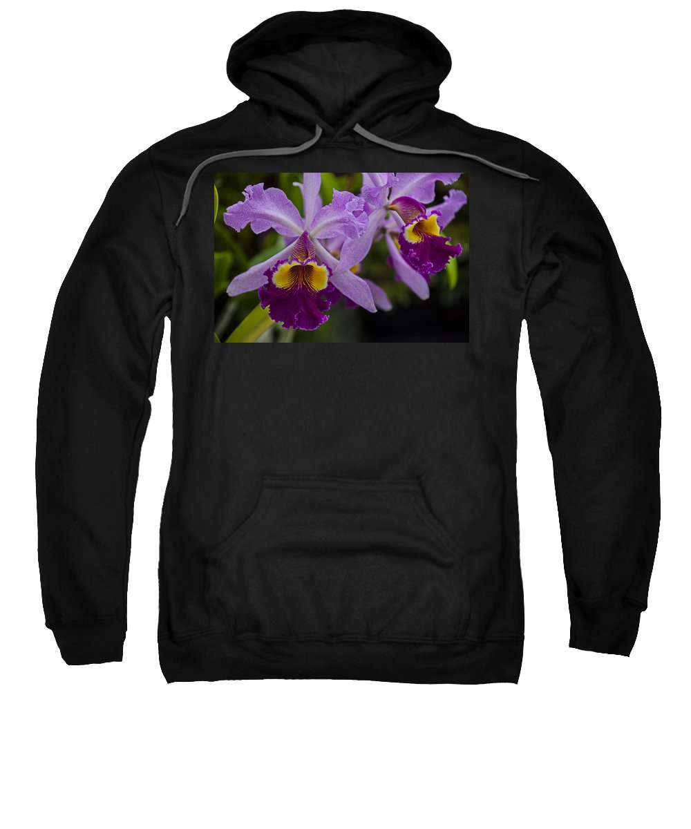 Two Pink Purple Sweatshirt featuring the photograph Two Pink Purple Orchids by Garry Gay
