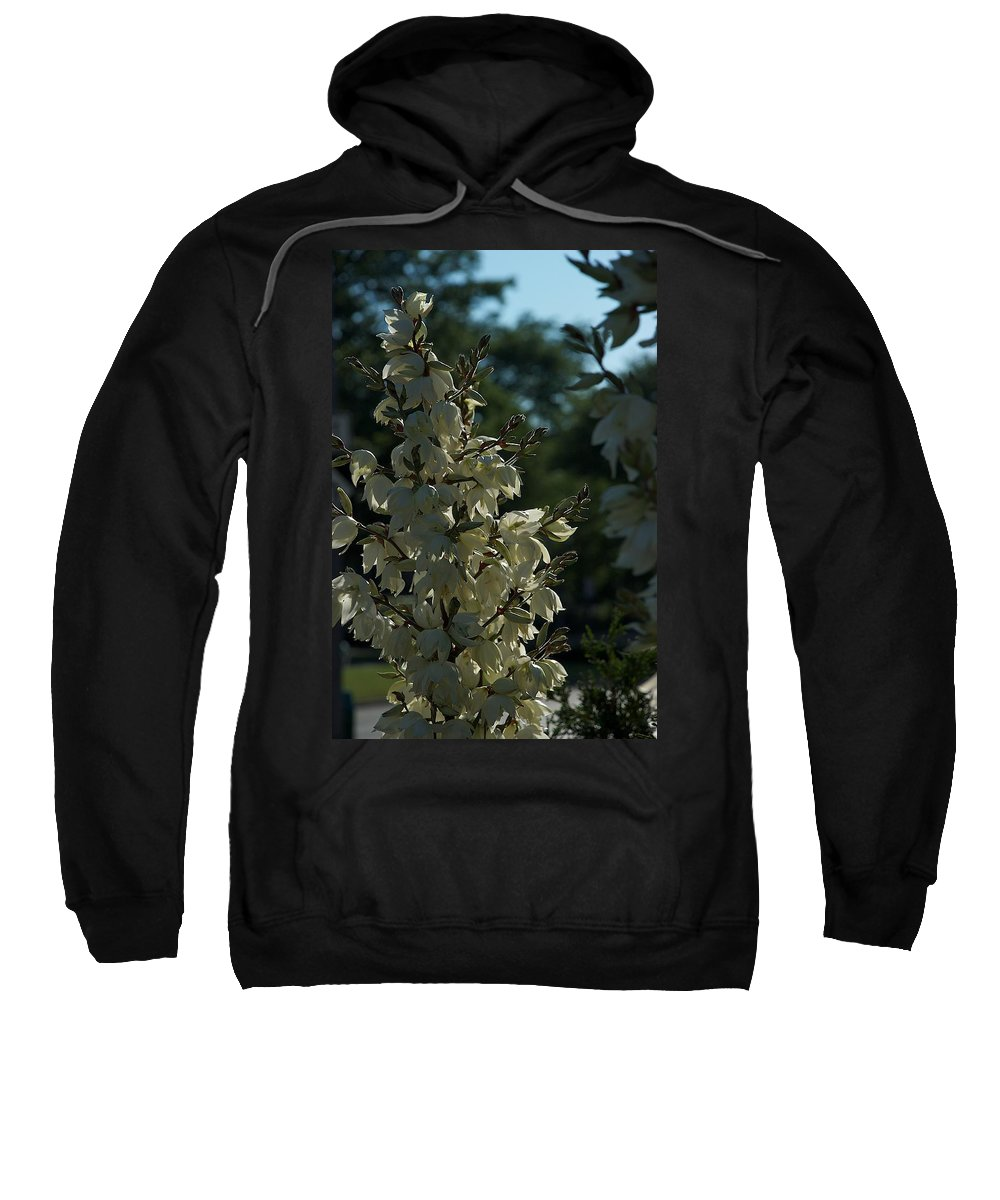 Flower Sweatshirt featuring the photograph Video Store by Joseph Yarbrough
