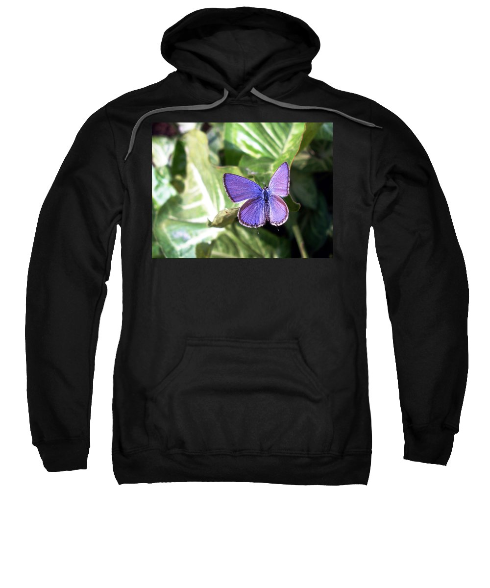 Violet Sweatshirt featuring the photograph Violet Butterfly by Sumit Mehndiratta