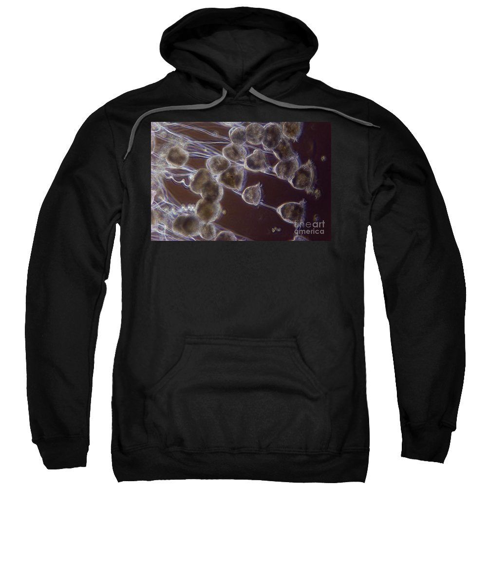 Science Sweatshirt featuring the photograph Vorticella by M. I. Walker