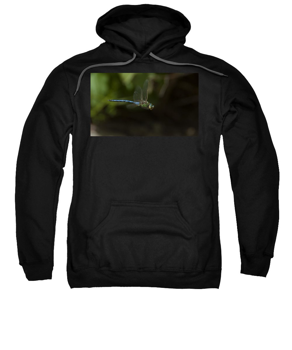 Dragon Fly Sweatshirt featuring the photograph Water Chaser by Focus Fotos