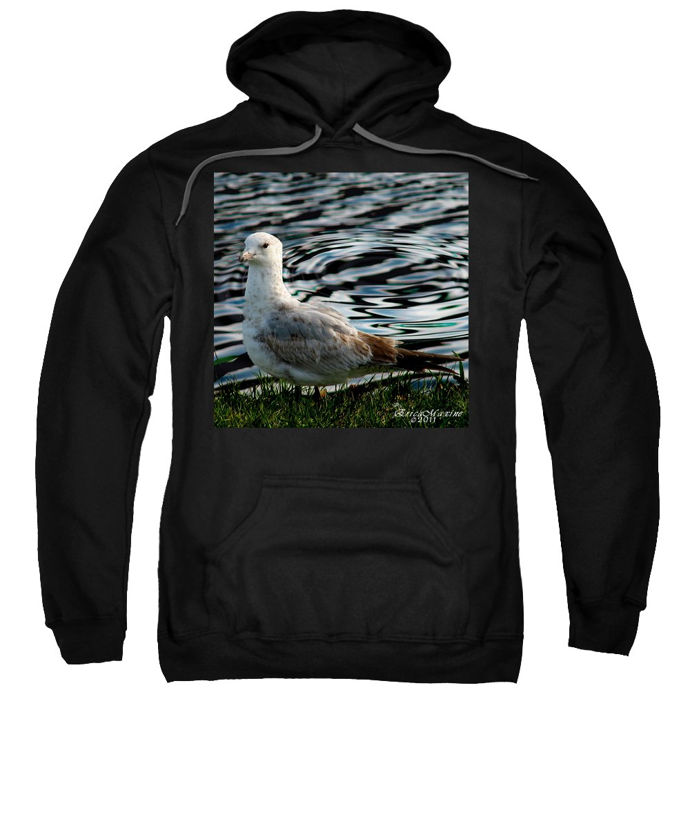 Ga Sweatshirt featuring the photograph Whatcha Lookin At by Ericamaxine Price