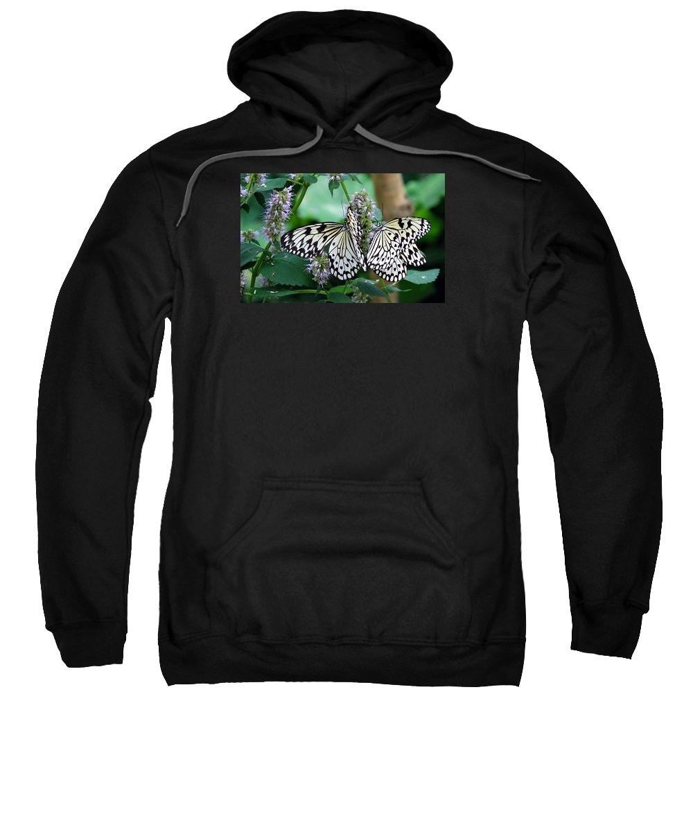 Butterfly Sweatshirt featuring the photograph White by Skip Willits