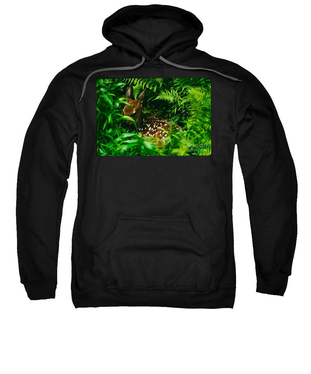 Whitetail Fawn Sweatshirt featuring the photograph Whitetail Fawn And Ferns by Joe Elliott