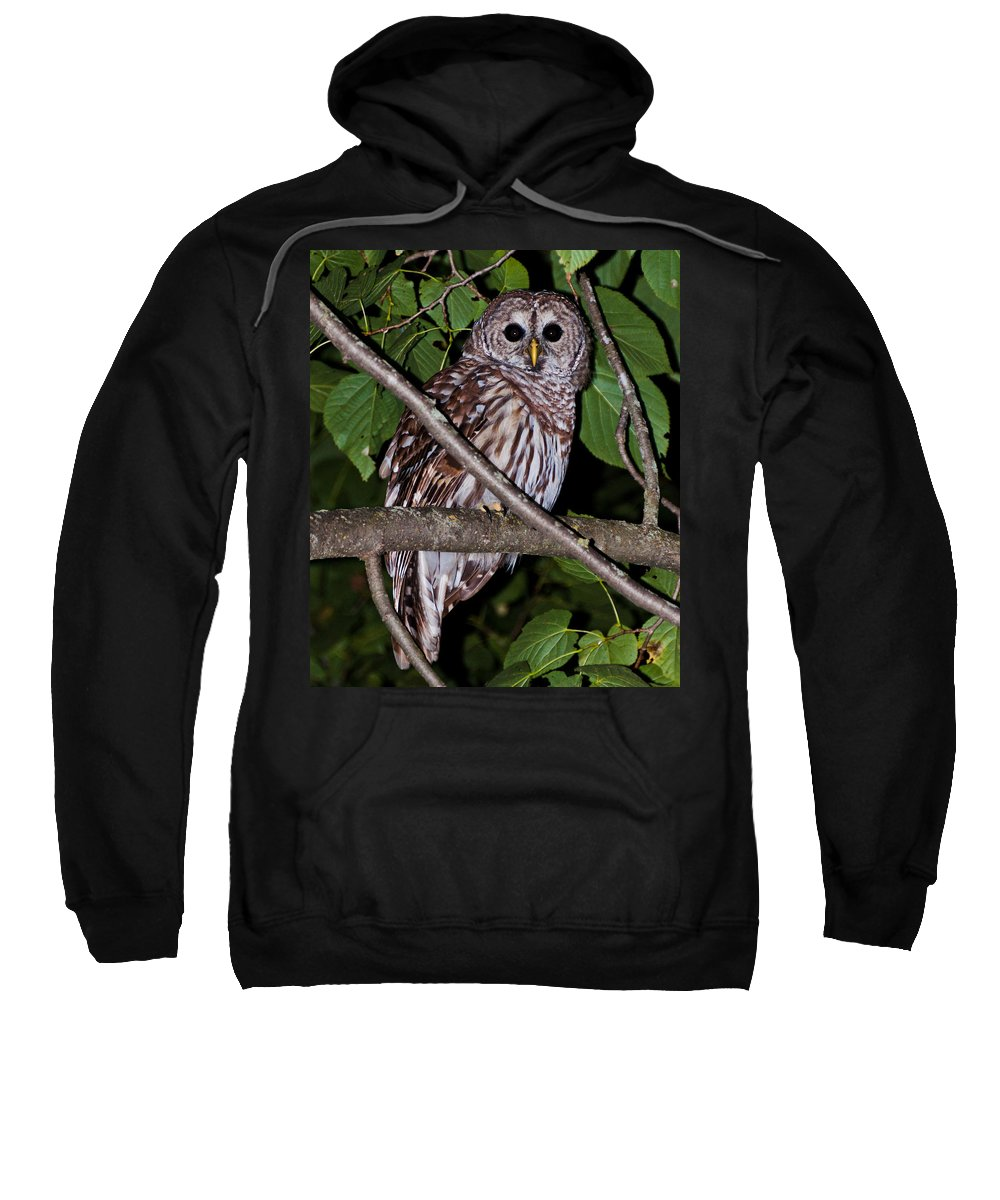 Owl Sweatshirt featuring the photograph Who Are You by Cheryl Baxter