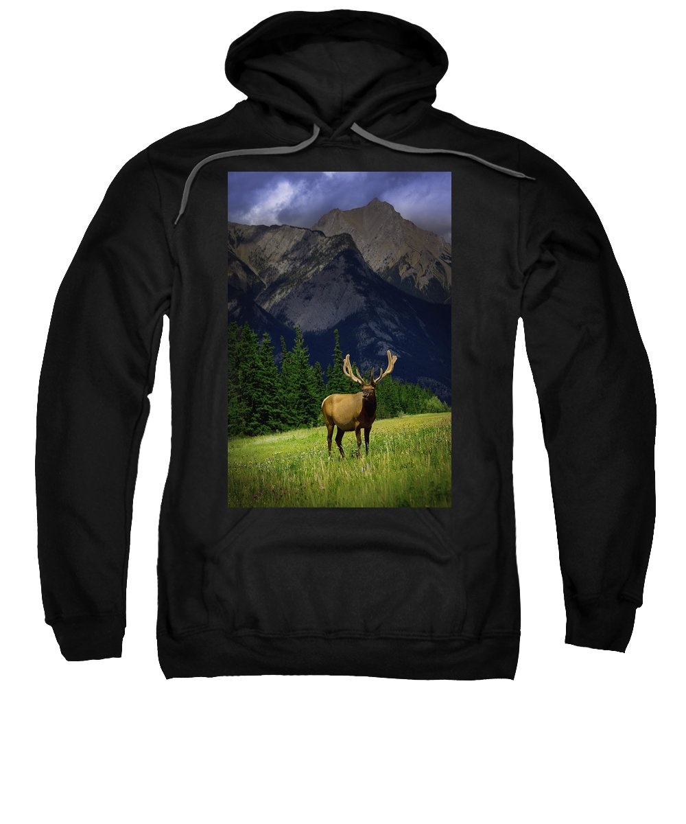 Outdoors Sweatshirt featuring the photograph Wildlife In The Mountains by Darren Greenwood