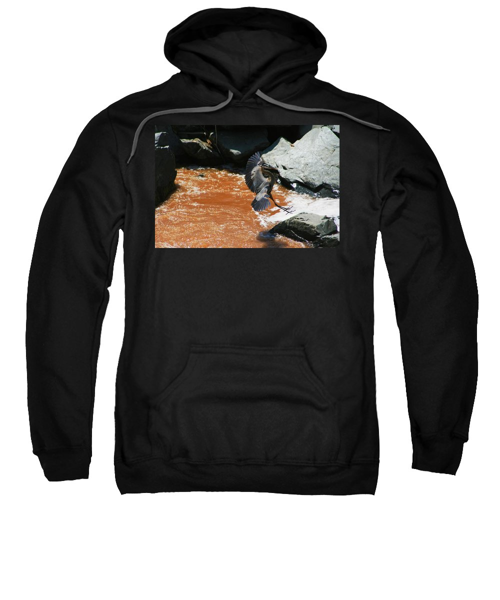 Blue Heron Sweatshirt featuring the photograph Winging It by Phil Cappiali Jr