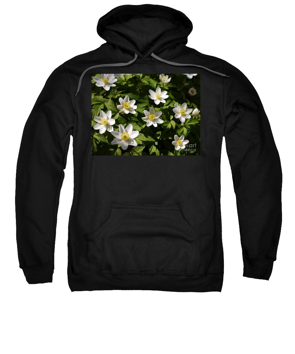 Wood Anemone Sweatshirt featuring the photograph Wood Anemone by John Chatterley