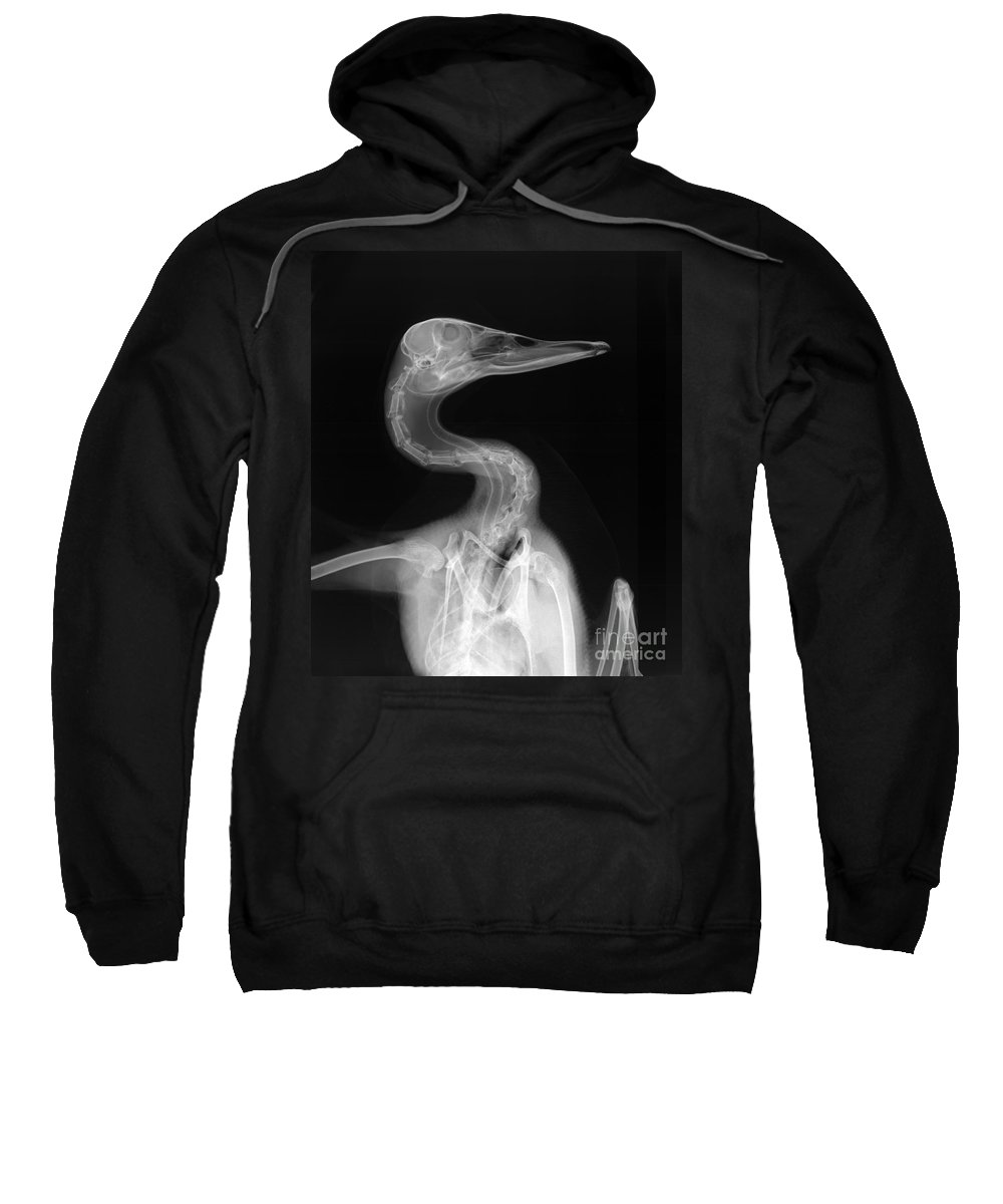 X-ray Sweatshirt featuring the photograph X-ray Of A Mallard Duck Head by Ted Kinsman