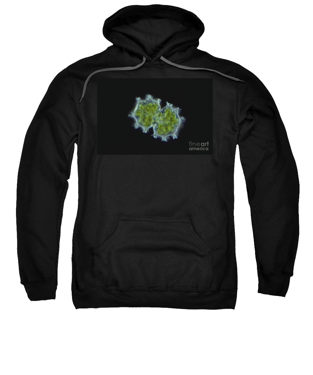 Science Sweatshirt featuring the photograph Xanthidium Sp. Algae Lm by M. I. Walker