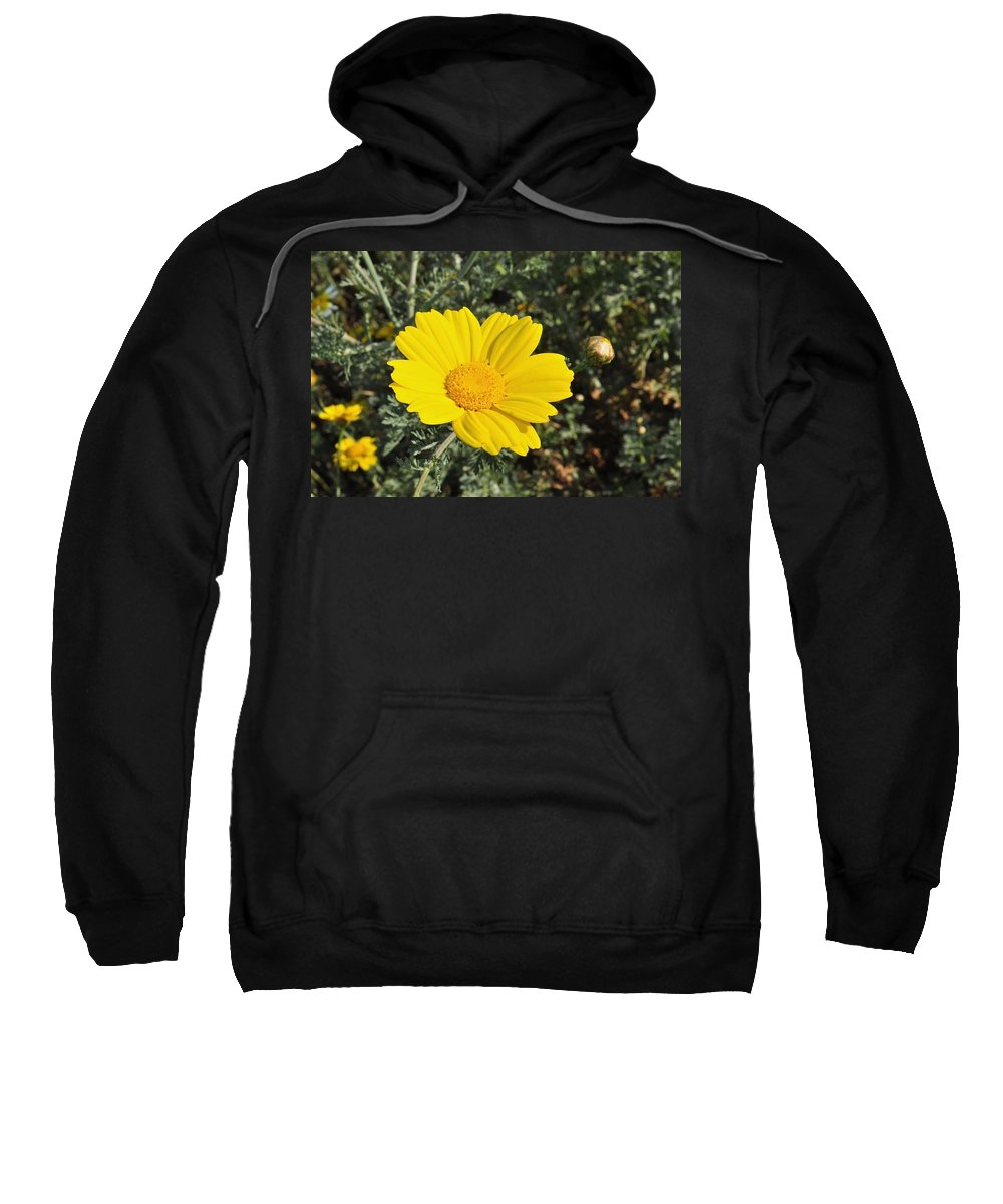 Yellow Sweatshirt featuring the photograph Yellow Daisy by Bridgette Gomes