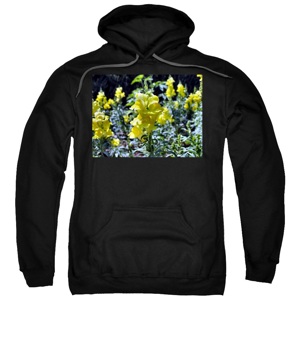 Snap Sweatshirt featuring the photograph Yellow Dragons by Art Dingo