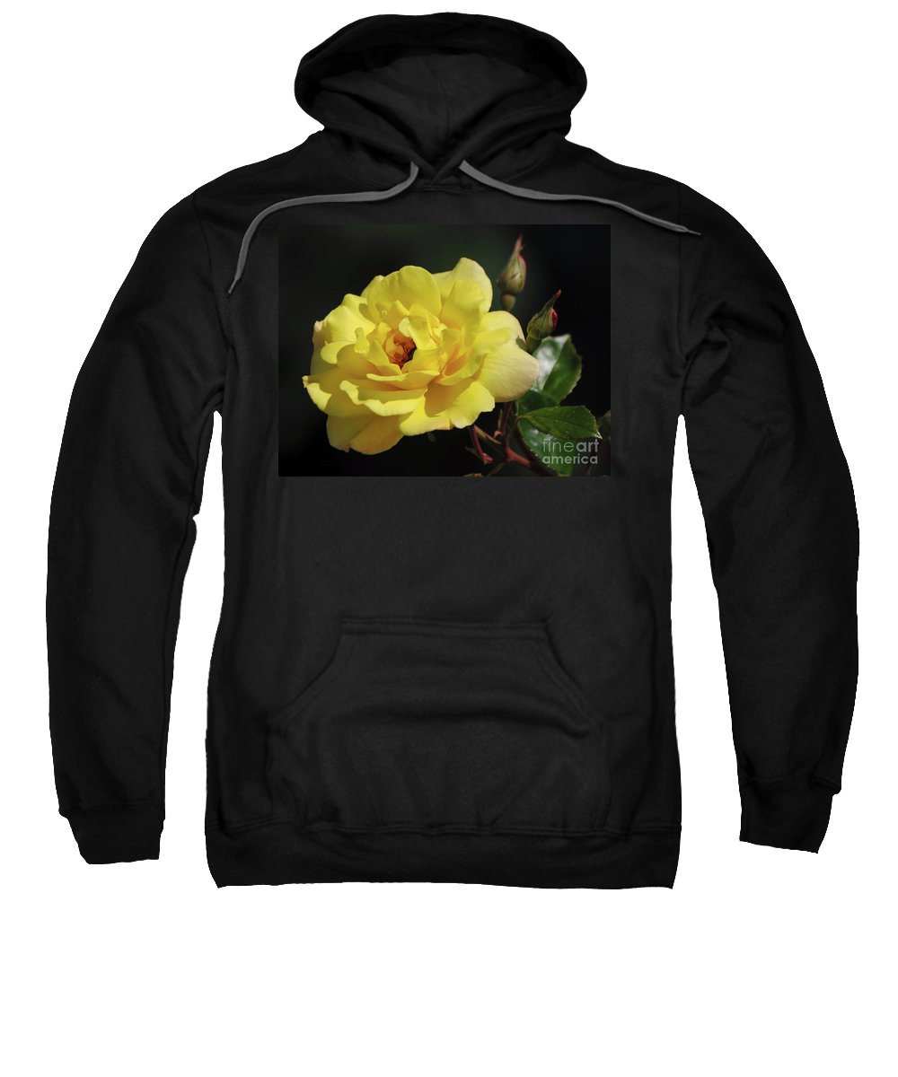 Yellow Sweatshirt featuring the photograph Yellow Rose by Ronald Grogan