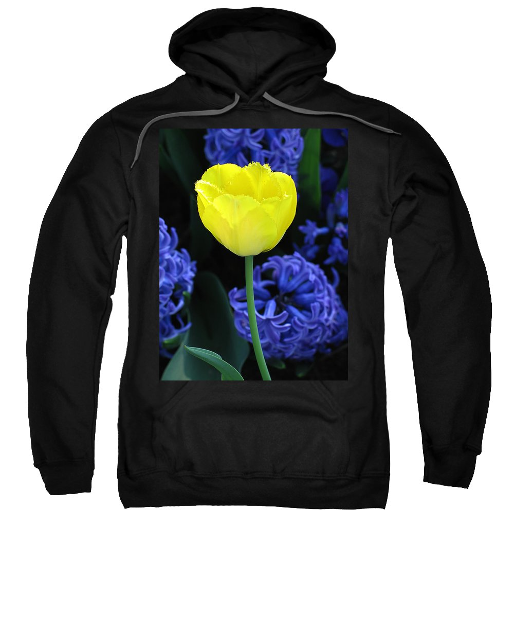 Tulip Sweatshirt featuring the photograph Yellow Tulip And Hyacinth by Greg Matchick