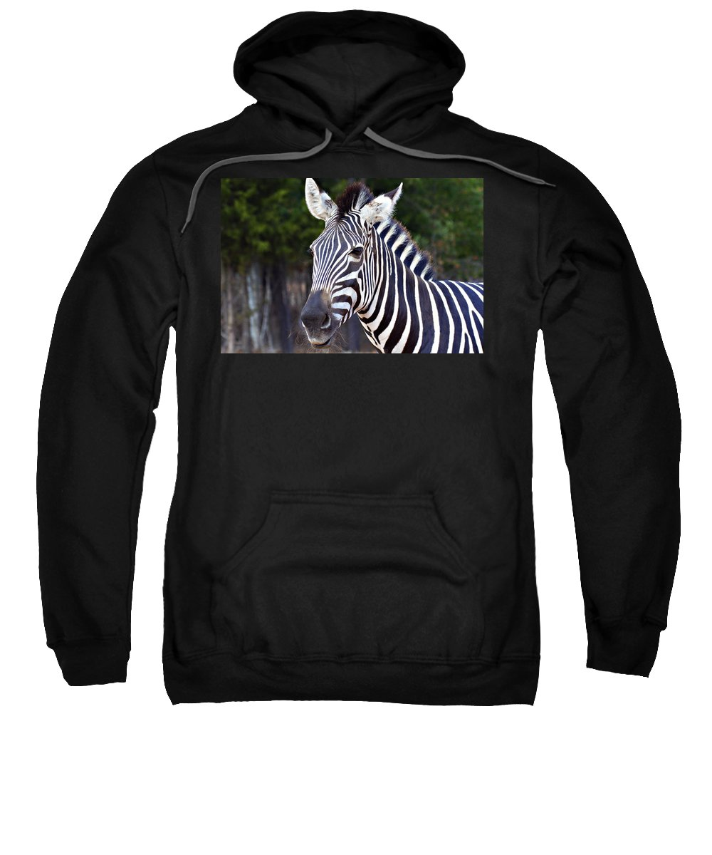 Zebra Sweatshirt featuring the photograph Zebra Symmetry by Douglas Barnard