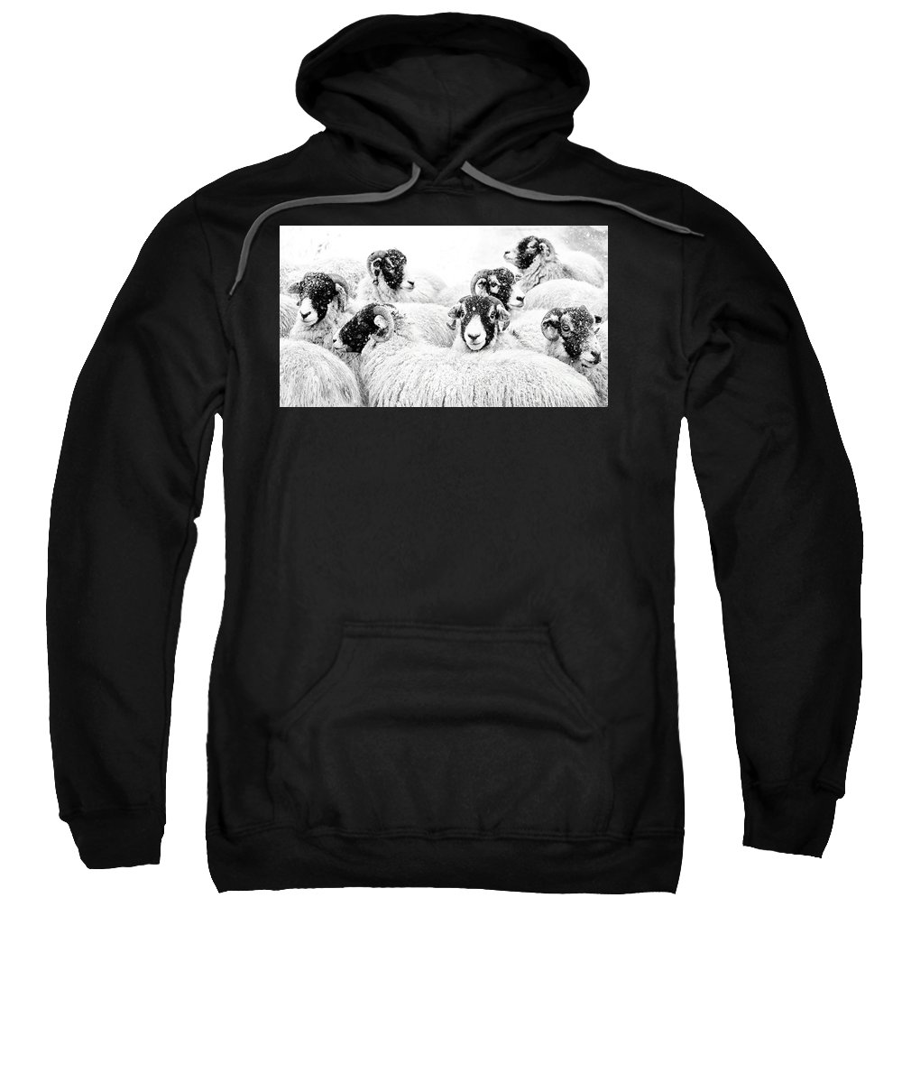 Swaledale Sweatshirt featuring the photograph In Winters Grip by Janet Burdon