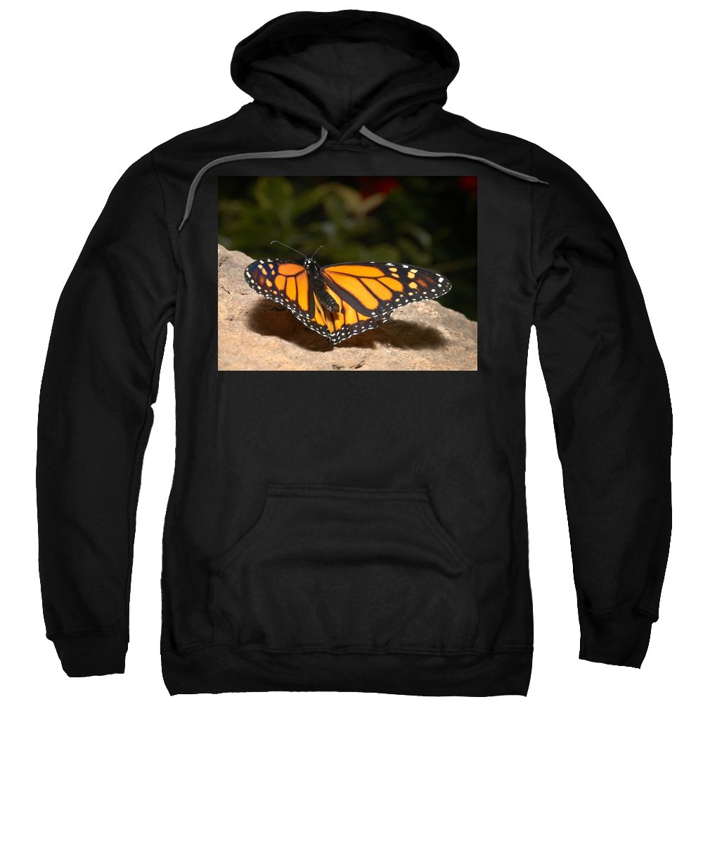 Lehtokukka Sweatshirt featuring the photograph Monarch 2 by Jouko Lehto