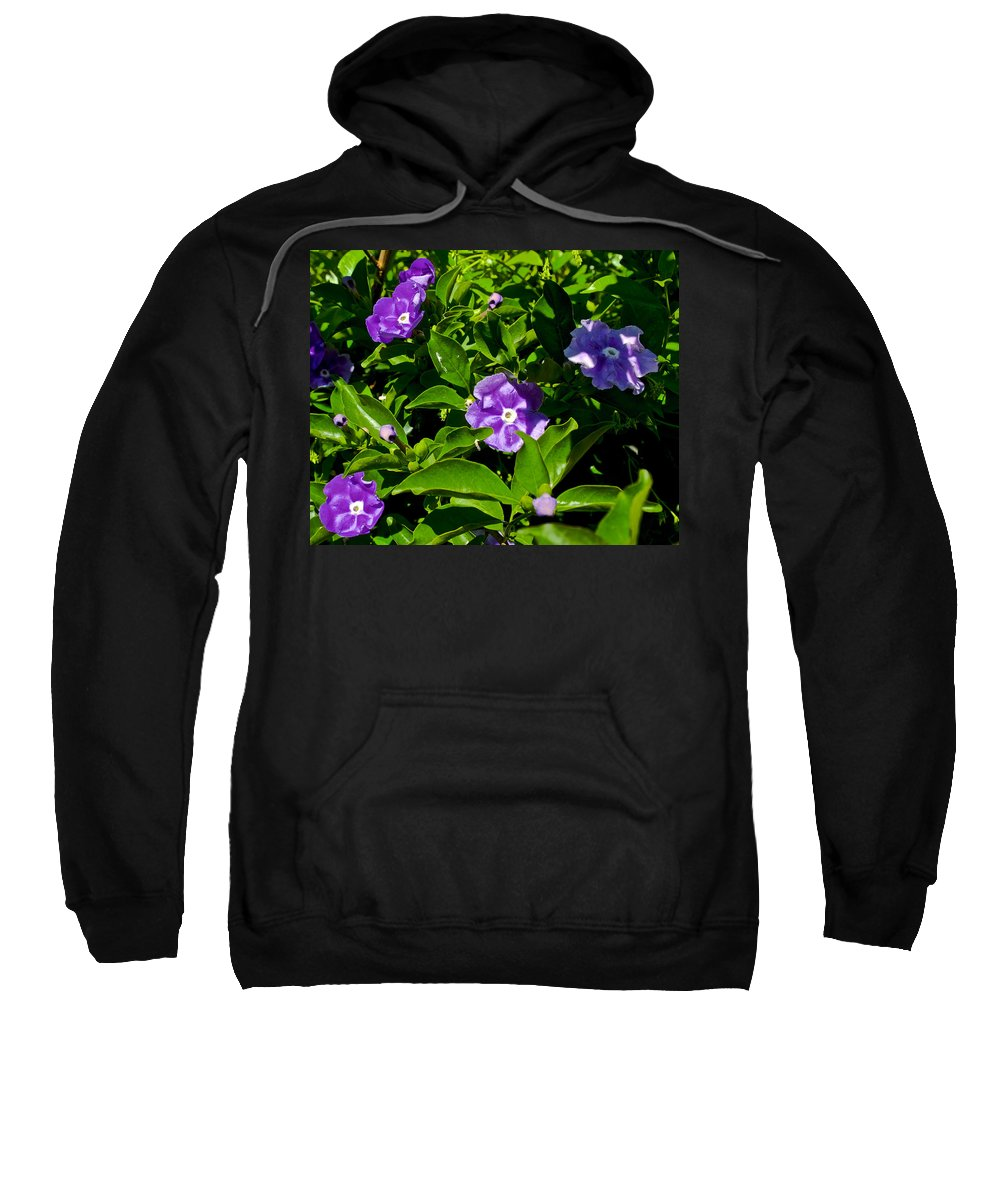 Purple Flowers At Pilgrim Place In Claremont Sweatshirt featuring the photograph Purple Flowers In Pilgrim Place In Claremont-california by Ruth Hager
