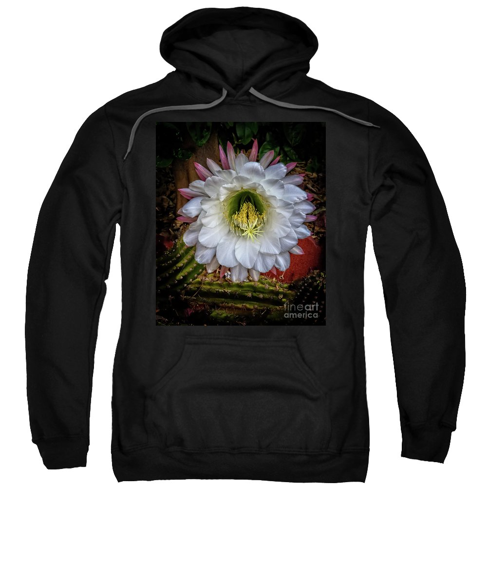 Argentine Giant Sweatshirt featuring the photograph Beautiful Cactus by Robert Bales