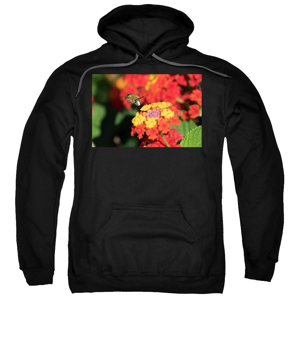 Bee Sweatshirt featuring the photograph Bee, Bumblebee, Flying To A Flower, In Marseille, France by Sylvie CUCCHI