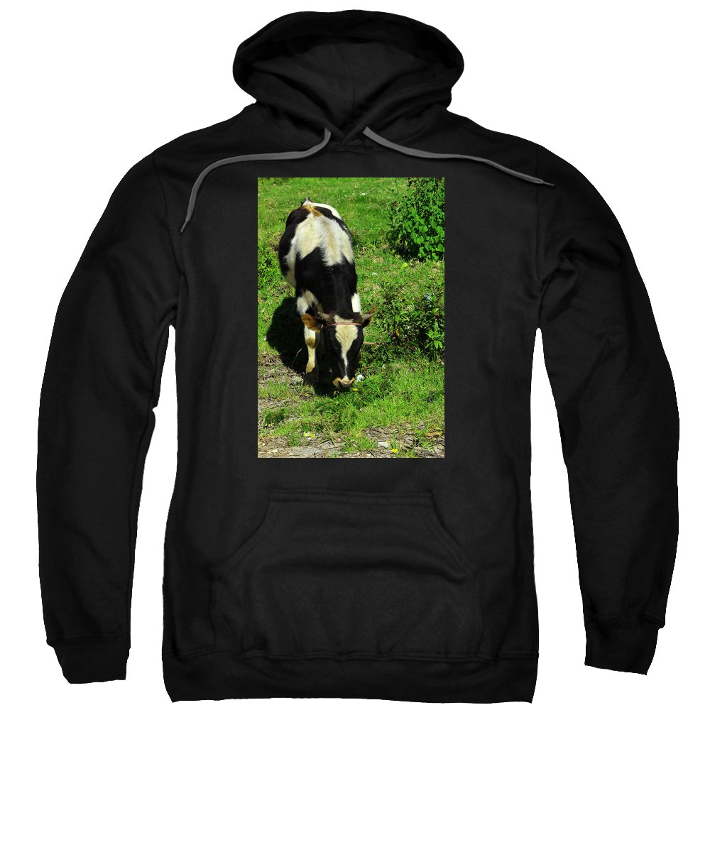 Holstein Sweatshirt featuring the photograph Cow In A Field by Robert Hamm