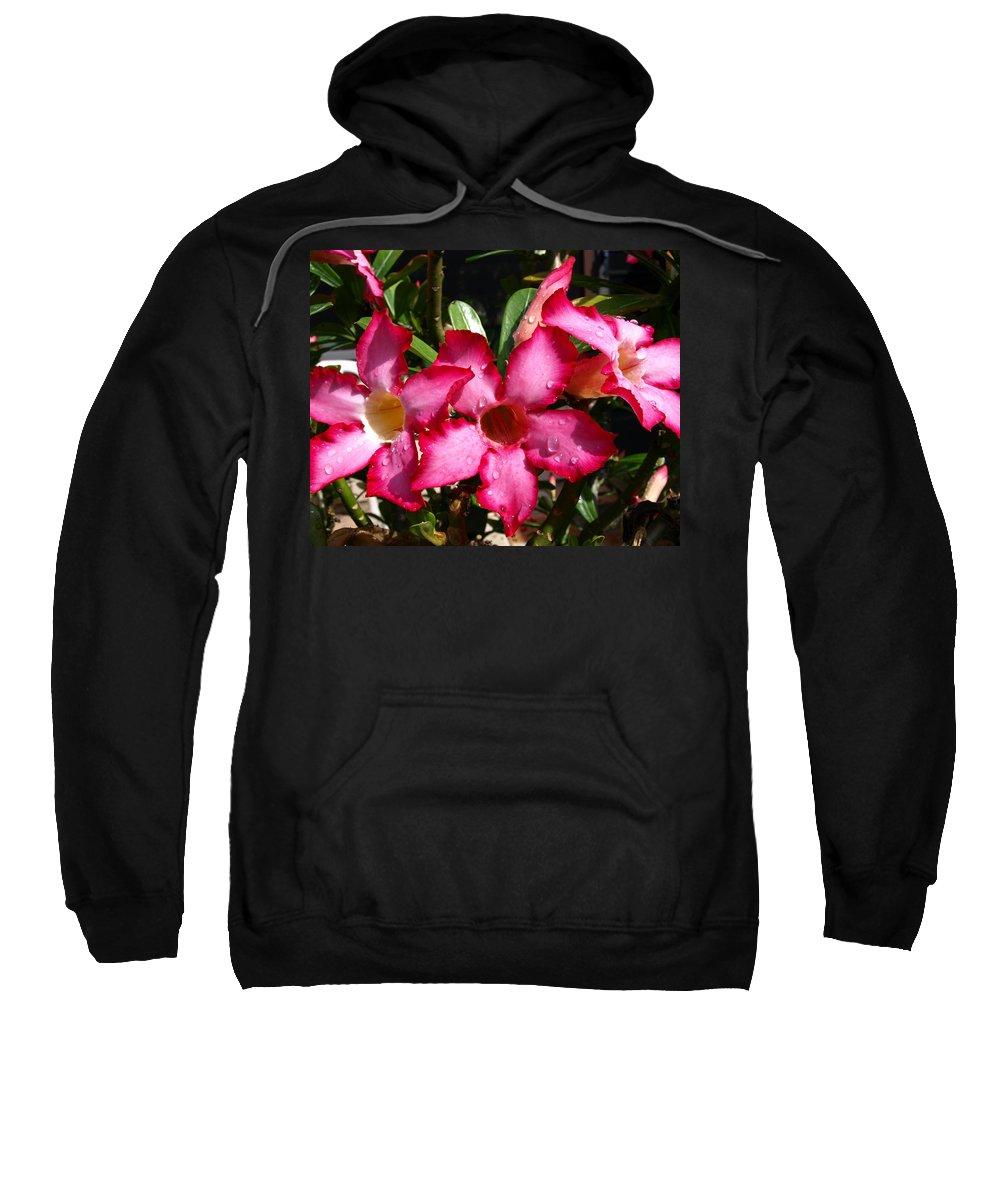 Desert Rose; Desert; Rose; Red; Pink; Flower; Bush; Garden; Florida; Plant; Adenium; Obesum; Africa; Sweatshirt featuring the photograph Desert Rose by Allan Hughes