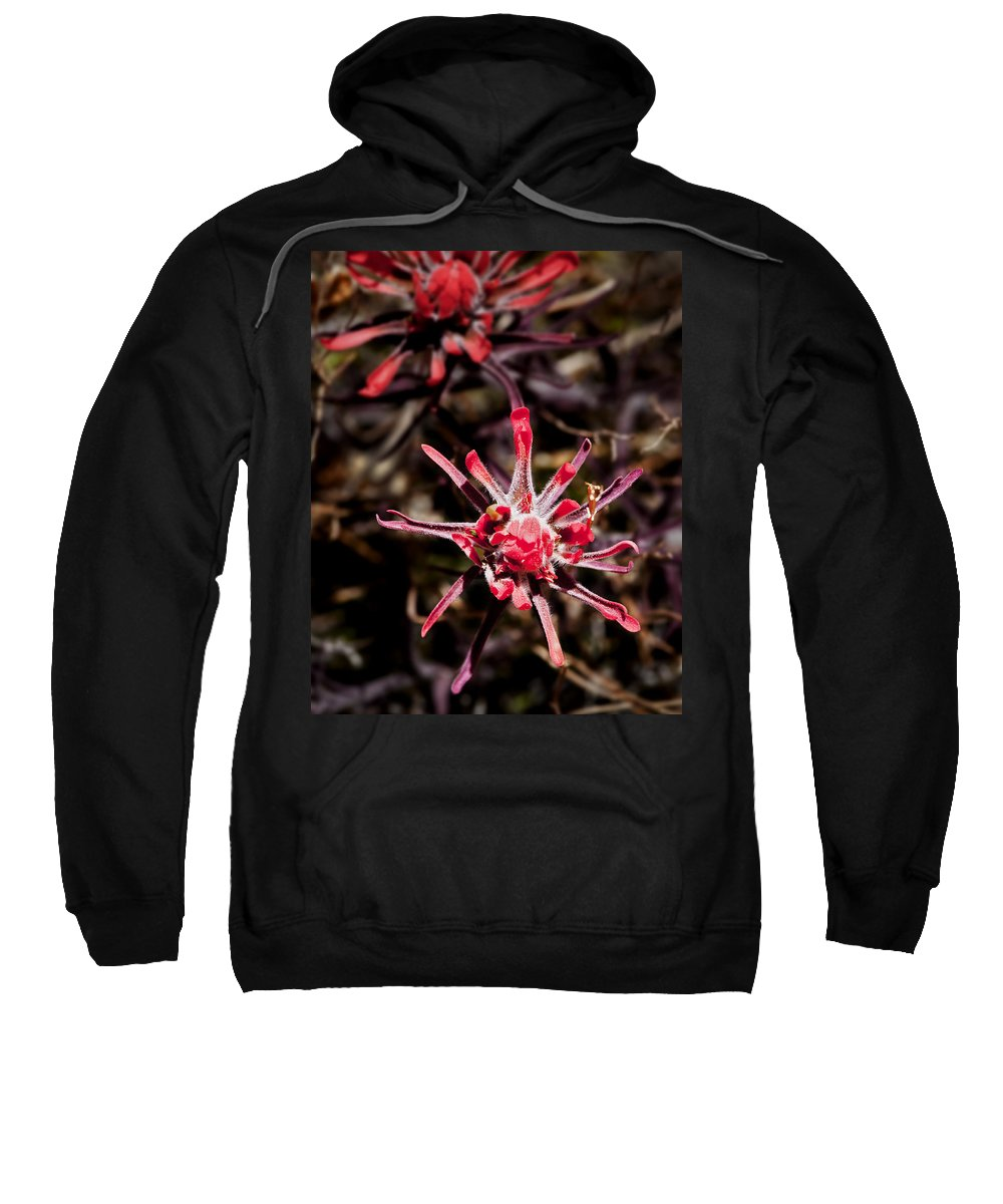 Flowers Sweatshirt featuring the photograph Desert Wildflower by Kelley King
