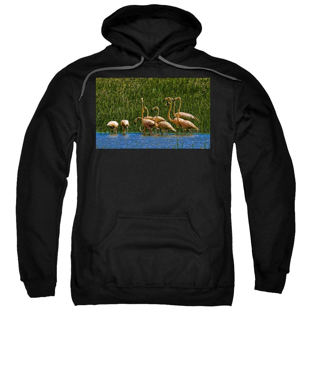 Flamingos Sweatshirt featuring the photograph Flamingo Family by Galeria Trompiz