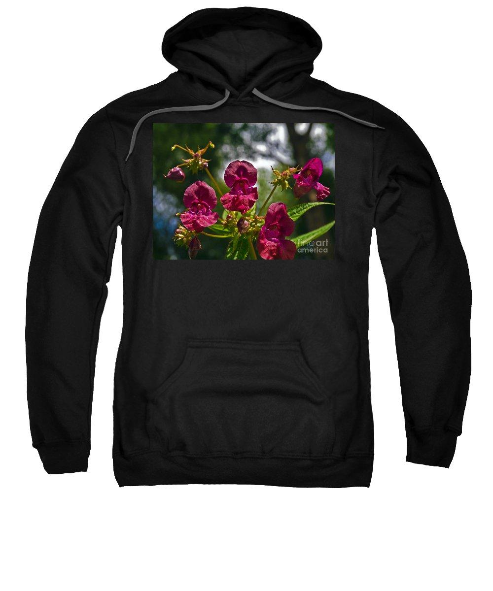 Lady Slipper Sweatshirt featuring the photograph Lady Slipper Orchid Dan146 by Howard Stapleton