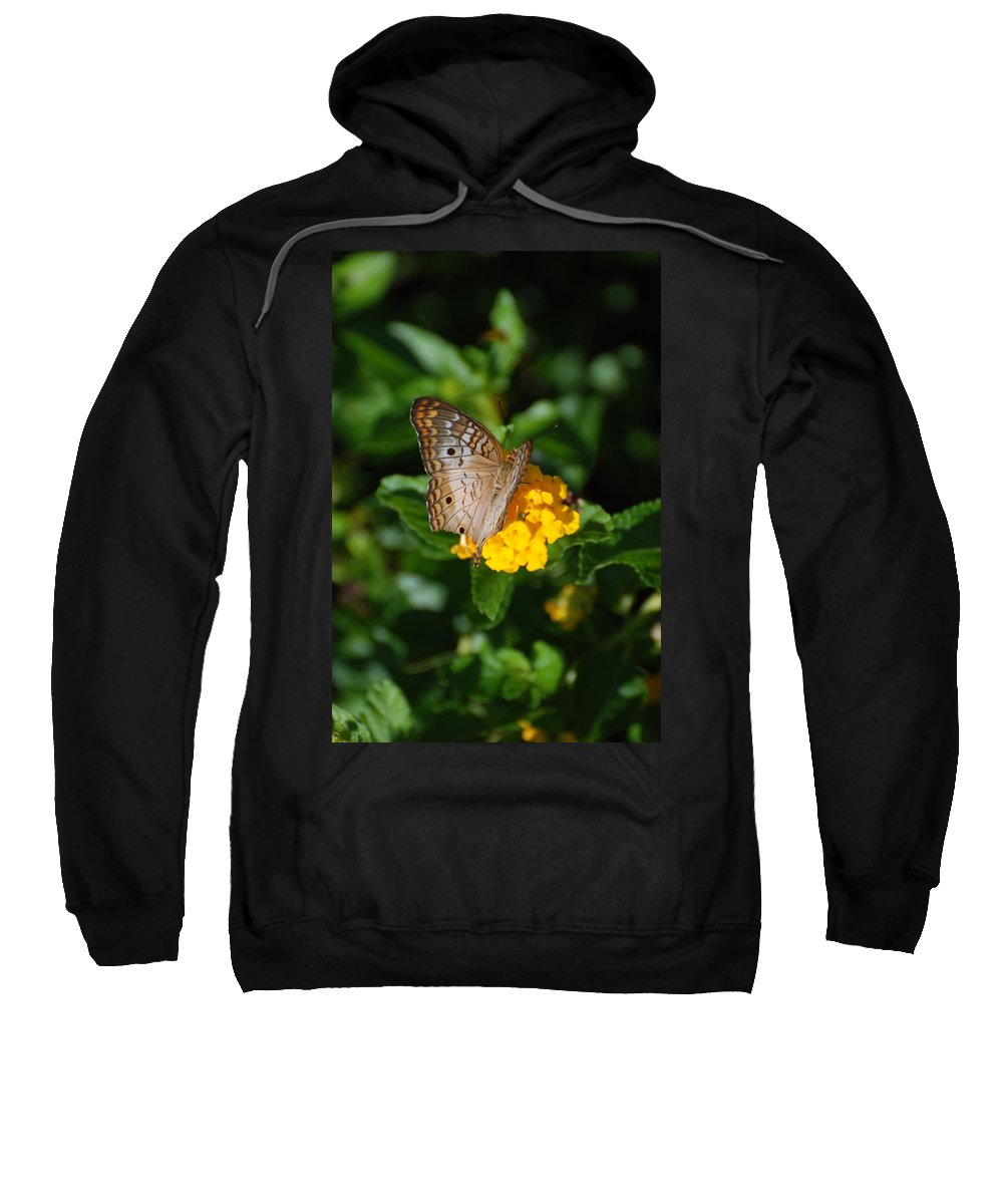 Butterfly Sweatshirt featuring the photograph Landed by Rob Hans