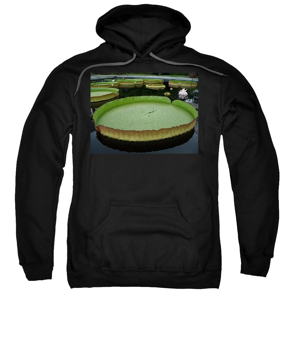 Lily Sweatshirt featuring the painting Lily Pads by Eric Schiabor