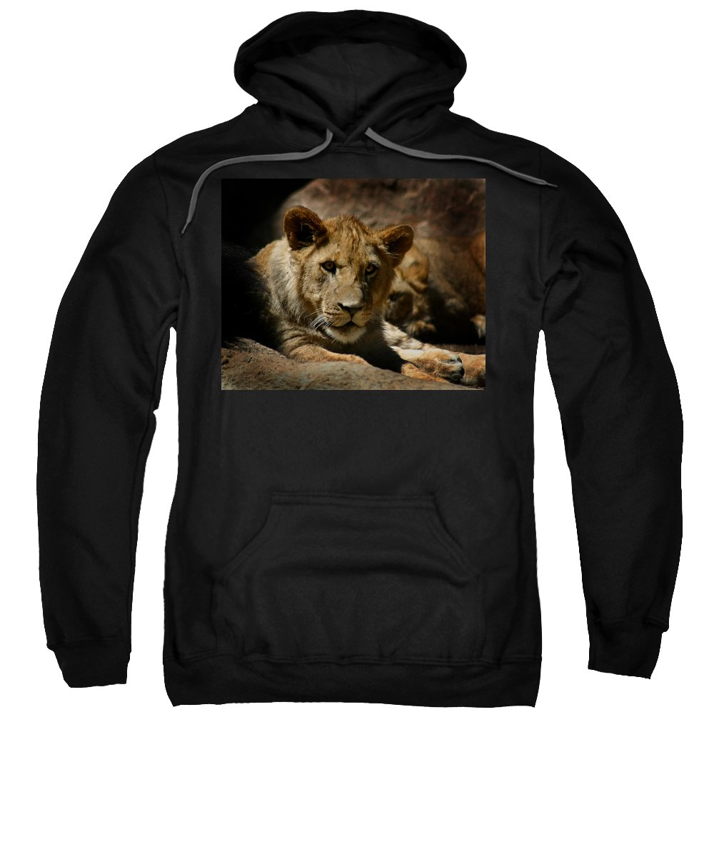 Lion Sweatshirt featuring the photograph Lion Cub by Anthony Jones