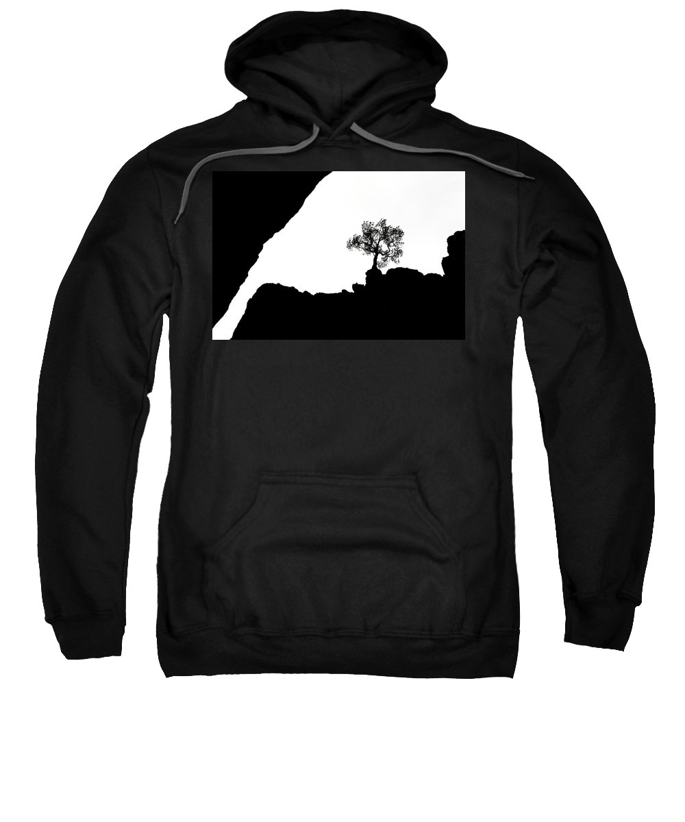 Tree Sweatshirt featuring the photograph Looking Up by Marilyn Hunt