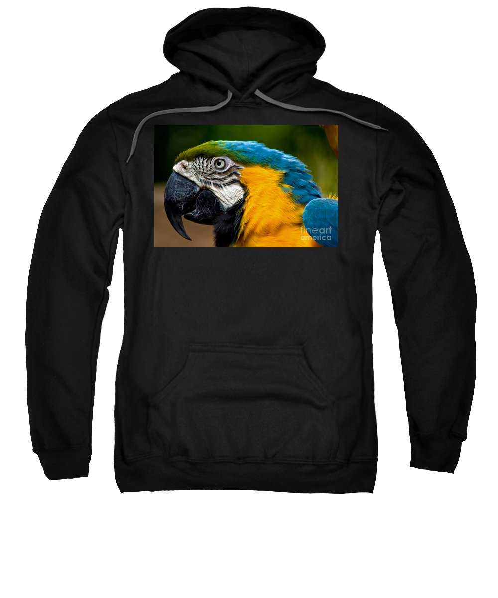 Macaw Sweatshirt featuring the photograph Macaw by Thomas Marchessault
