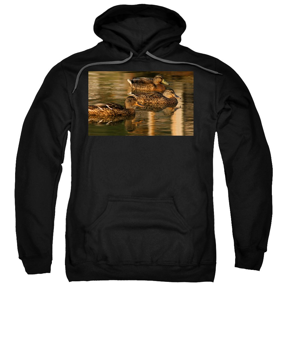 Ducks Sweatshirt featuring the photograph Mallards Swimming In The Water At Magic Hour by Angela Rath