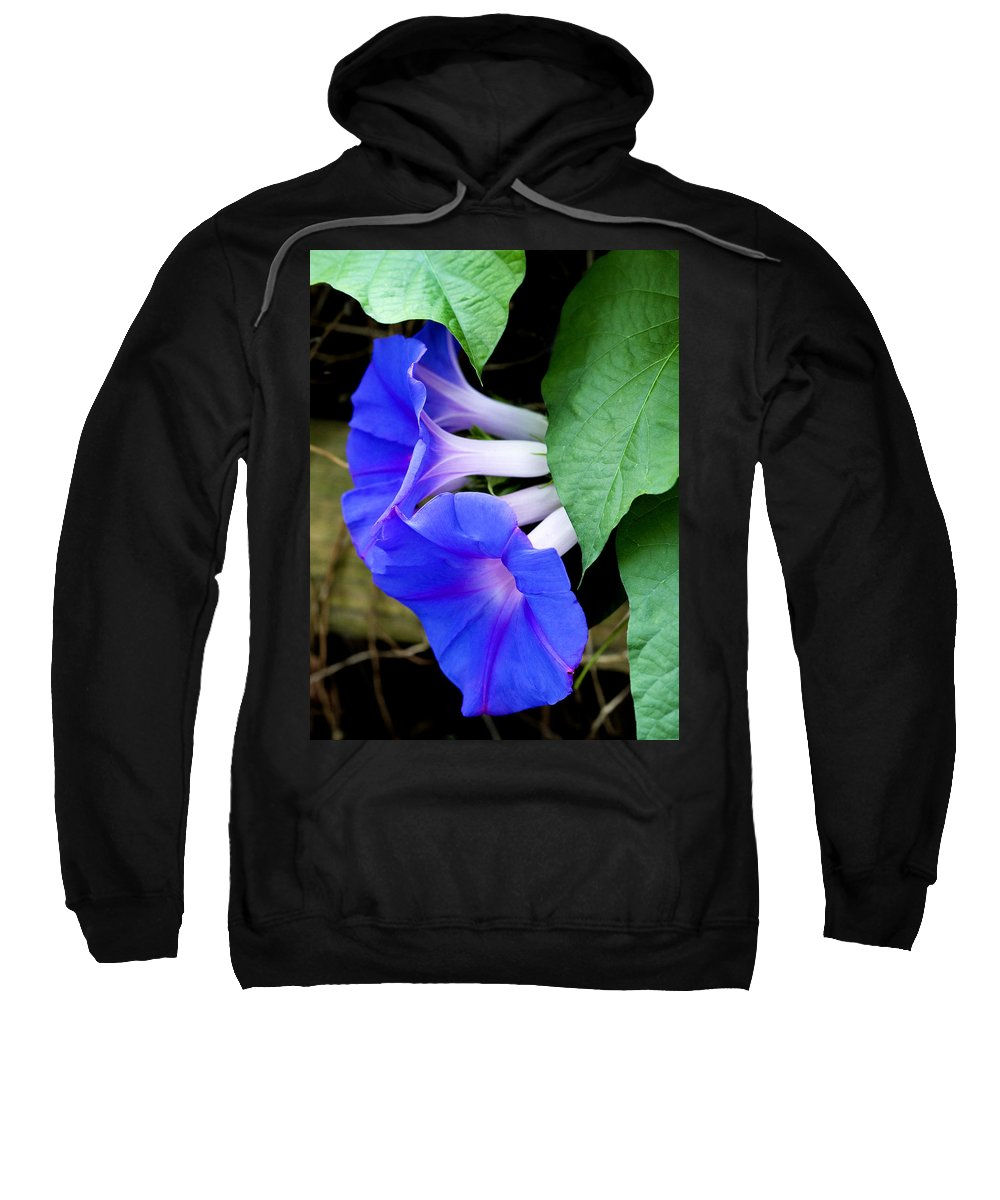 Morning Glory Sweatshirt featuring the photograph Morning Glory by Marilyn Hunt