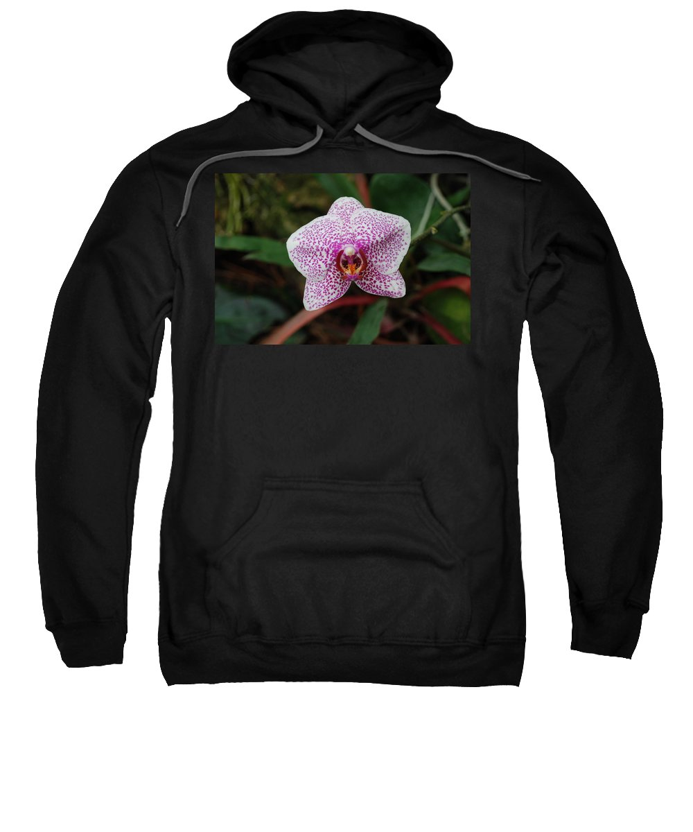 Pink Sweatshirt featuring the photograph Orchid by Rob Hans
