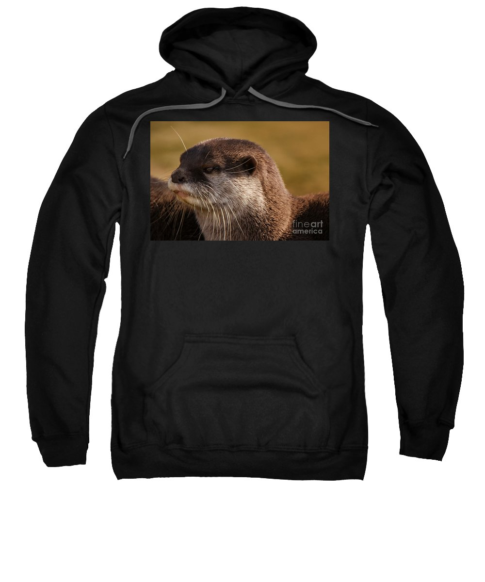 Animal Sweatshirt featuring the photograph Oriental-small-clawed-otter by Rawshutterbug