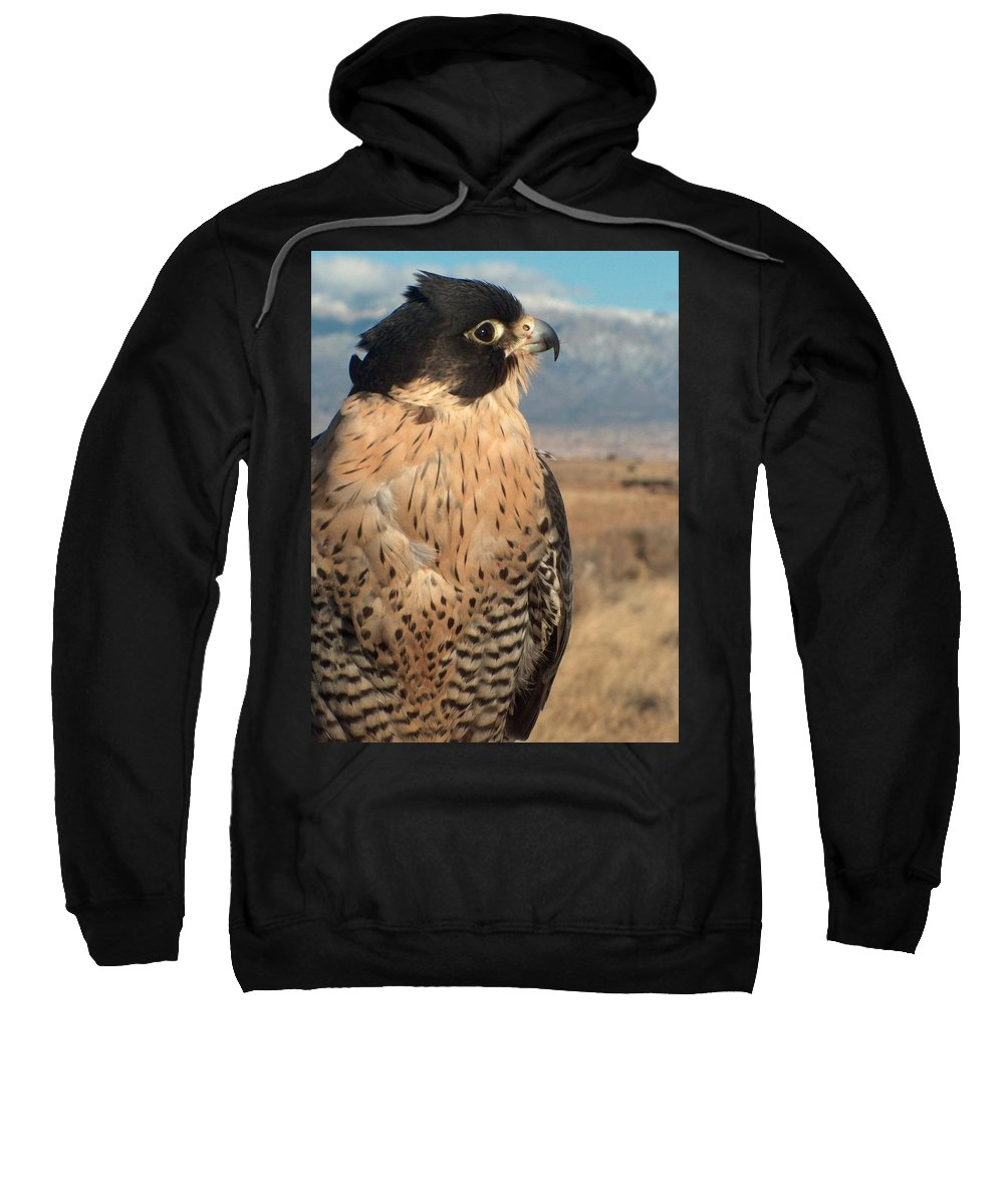 Peregrine Falcon Sweatshirt featuring the photograph Peregrine Falcon by Tim McCarthy
