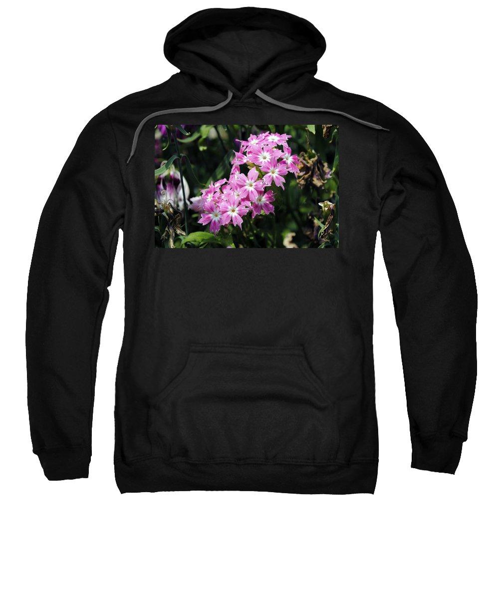 Petals Sweatshirt featuring the photograph Pink Flowers by Sumit Mehndiratta