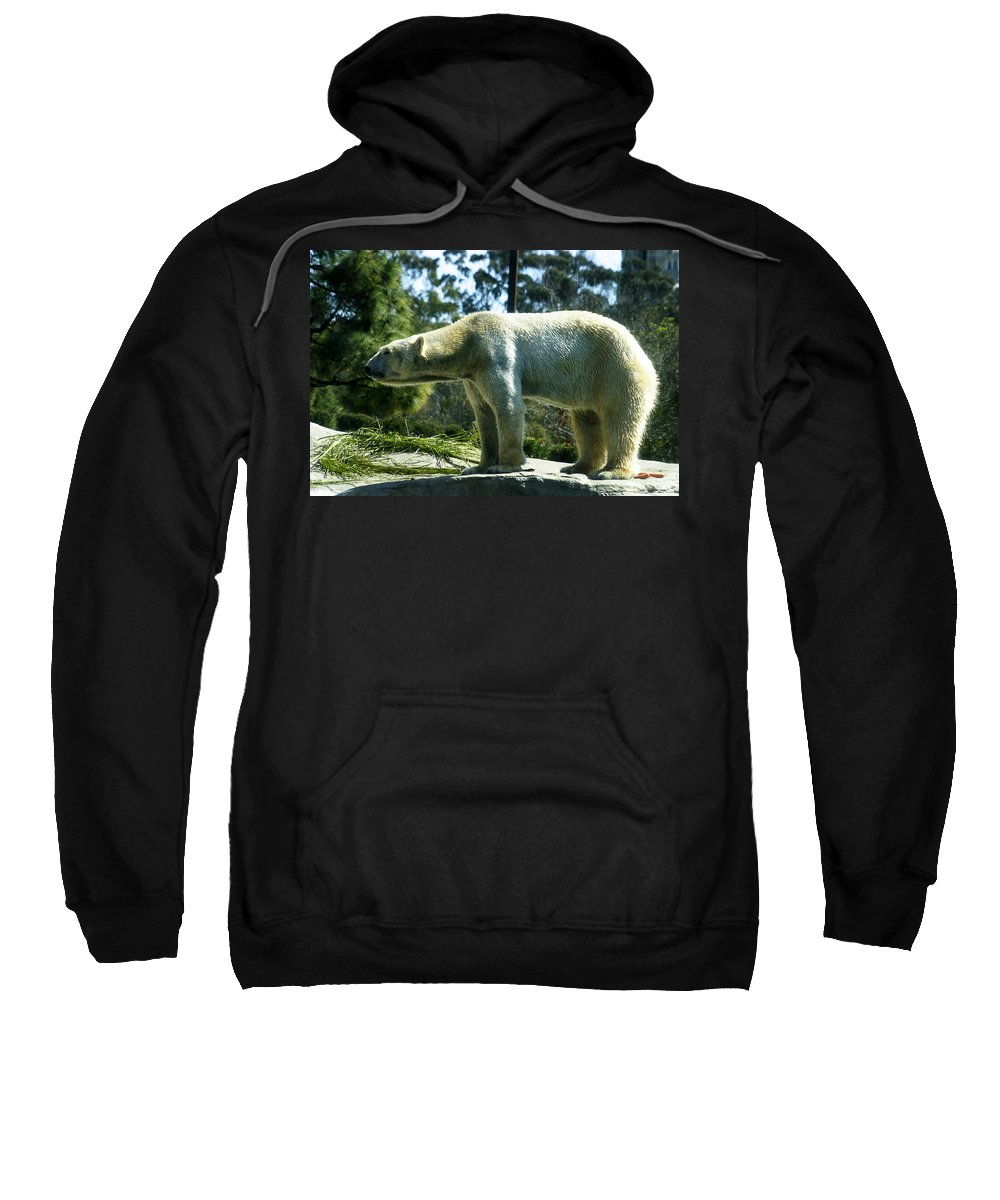 Zoo Sweatshirt featuring the photograph Polar Bear by Anthony Jones