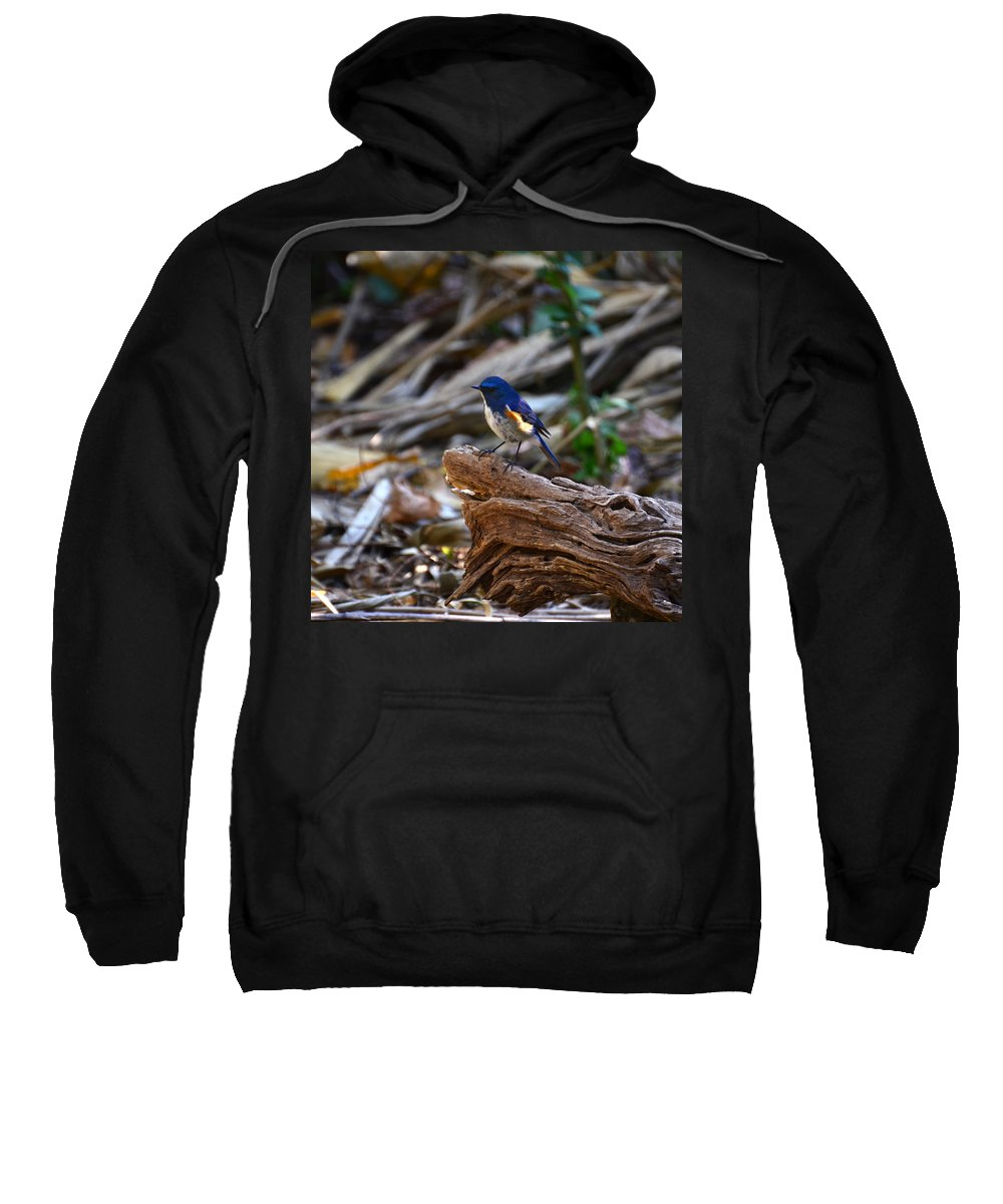 Red-flanked Bluetail Sweatshirt featuring the photograph Red-flanked Bluetail 2 by David Hohmann
