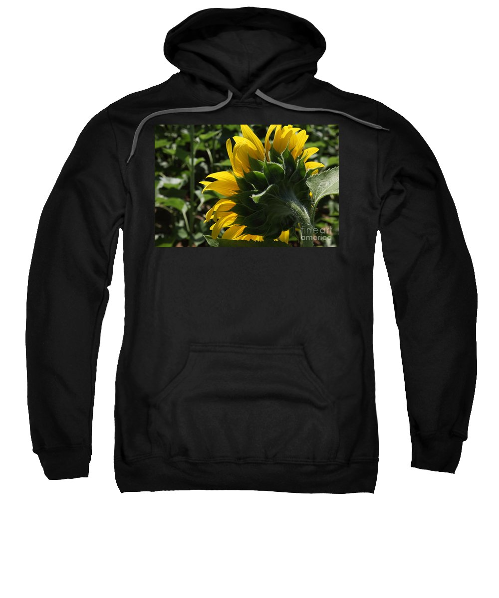 Sunflower Sweatshirt featuring the photograph Sunflower Series 09 by Amanda Barcon