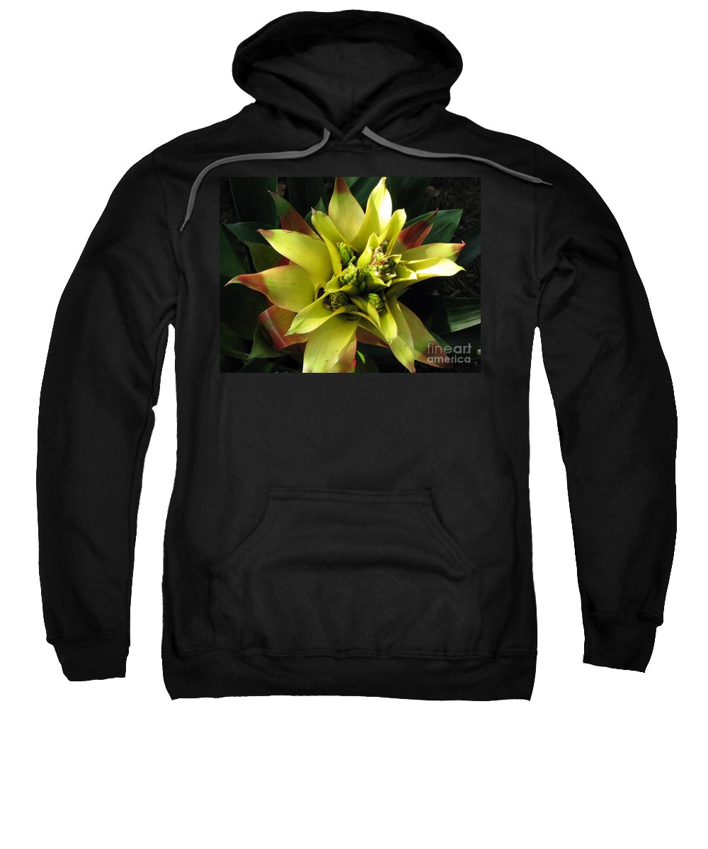 Tropical Sweatshirt featuring the photograph Tropical by Amanda Barcon