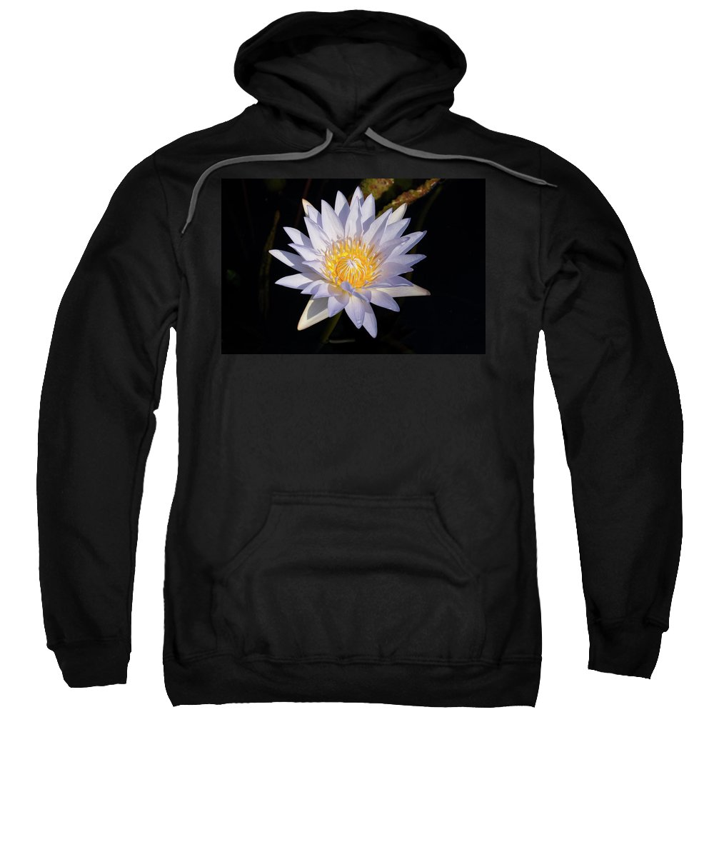 Water Lily Sweatshirt featuring the photograph White Water Lily by Steve Stuller