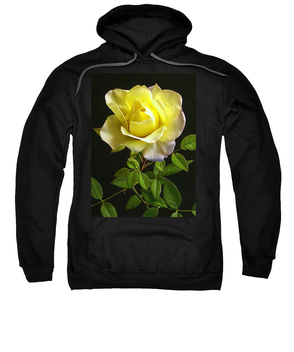 Yellow Roses Sweatshirt featuring the photograph Yellow Rose by Jim Smith