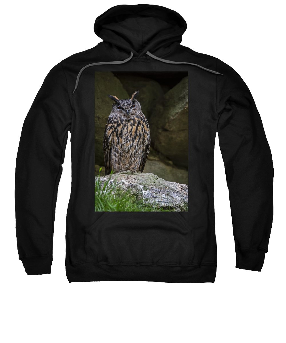 Eurasian Sweatshirt featuring the photograph 150501p123 by Arterra Picture Library