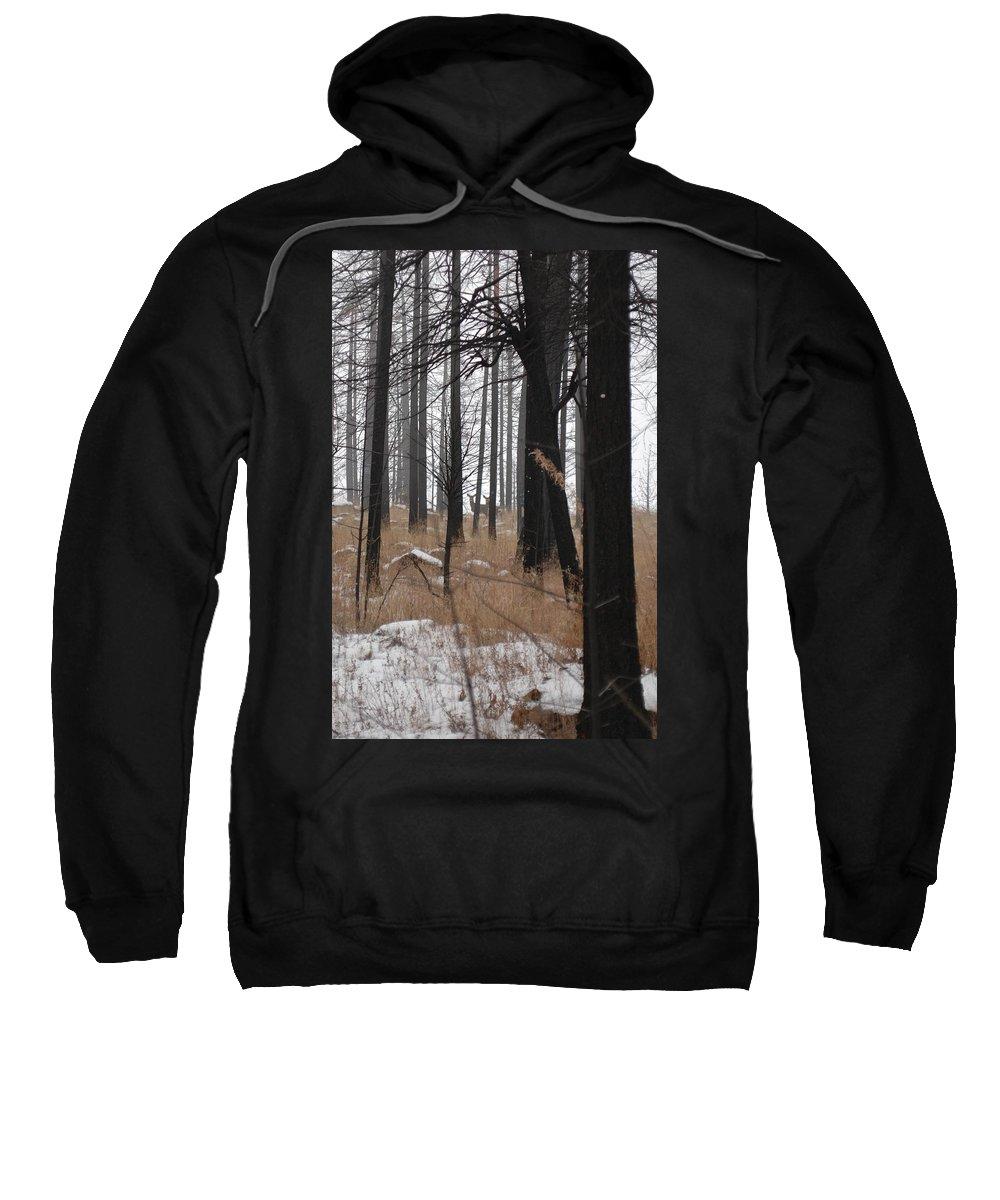 Trees Sweatshirt featuring the photograph 2 Deers by Sara Stevenson